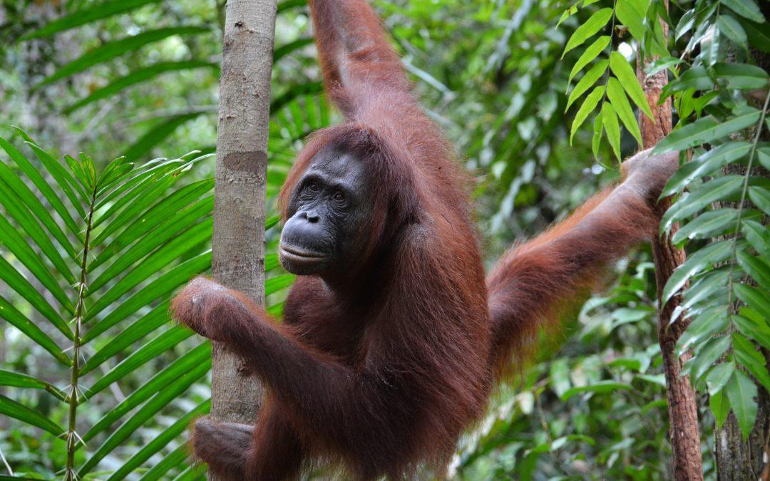 Voyager en Indonésie à la découverte de 3 parcs nationaux incontournables