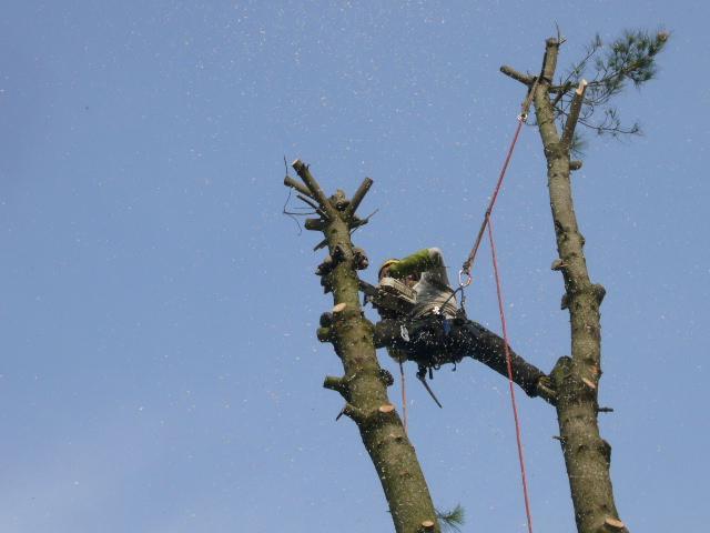 L'élagage, un coup de lifting utile aux arbres